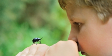 Insects and stings in the countryside: what to do if you have young children?